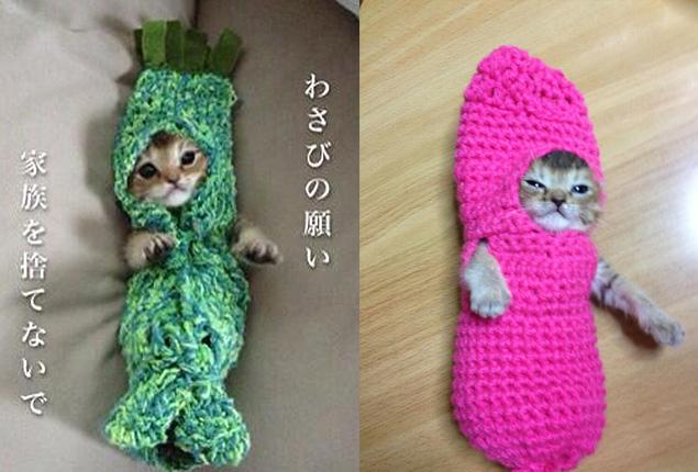 Вязание крючком на кошку 427