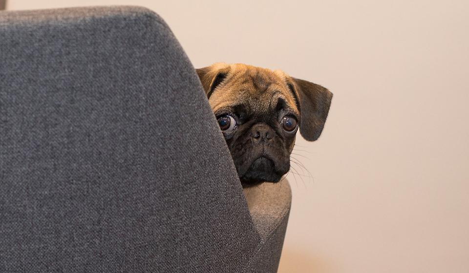 Породы собак средних размеров, фотографии и названия | 560x960