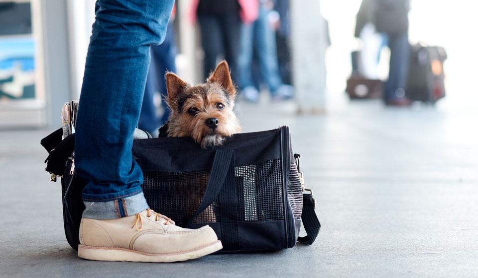 Сколько стоит билет на собаку в самолет по россии автомобиль в аренду портер