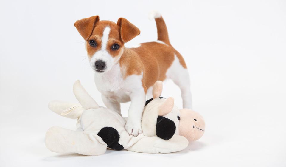 Собака для ребенка. Лучшие породы собак для детей | 560x960