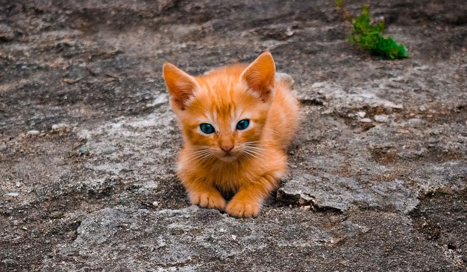 стригущий лишай домашней кошки москва