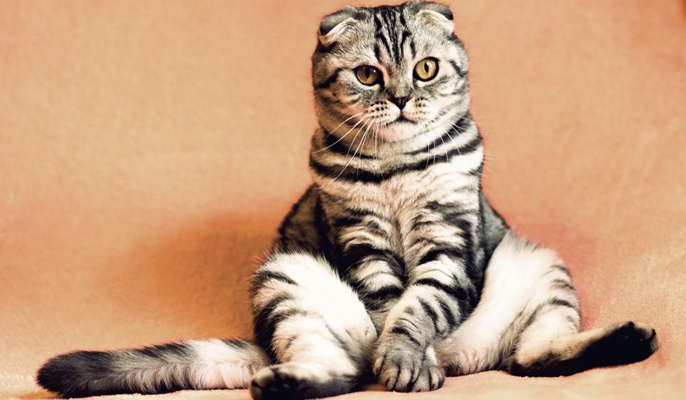 когда стерилизуют кошек возраст цена