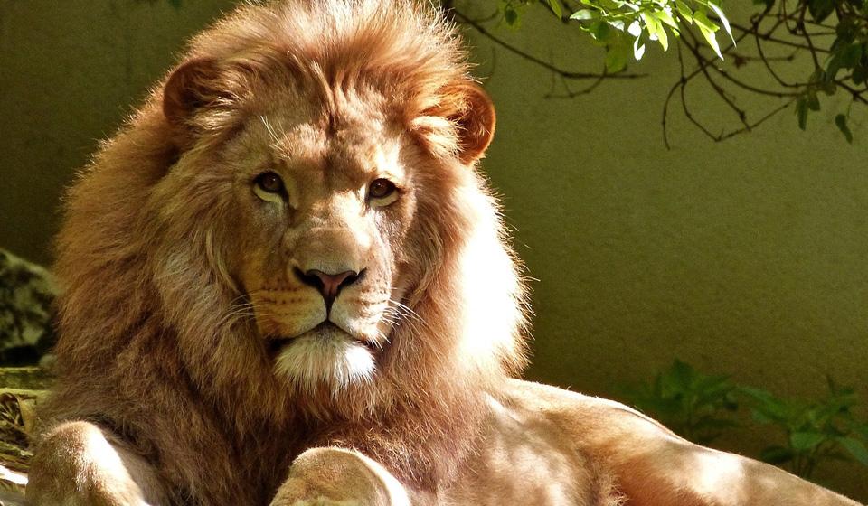 юридическая консультация лев