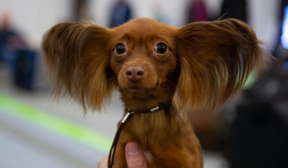 смотреть породы собак и названия пород