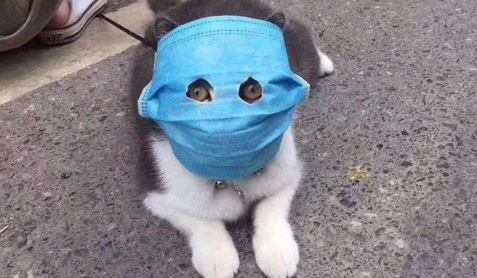 что делать если у котенка коронавирус