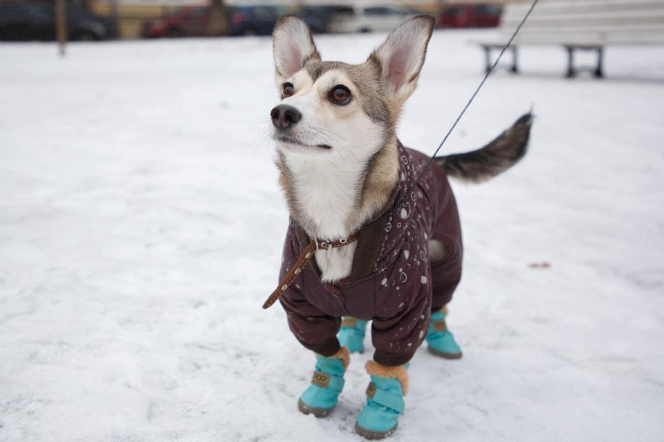 Картинки по запросу собака зимой