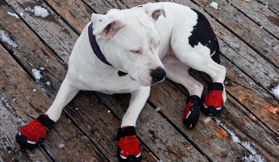 Дрессировка собак в элисте