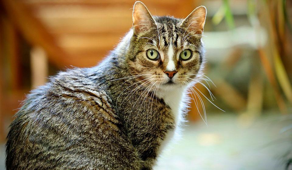 тошнит кошку причины