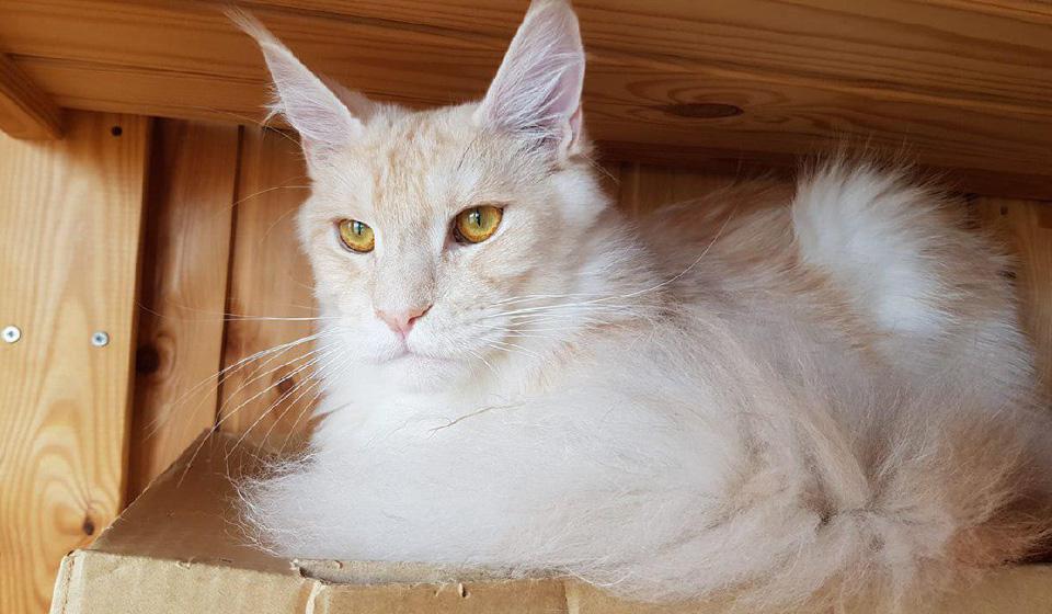 понос у котов и кошек что делать и чем лечить в домашних