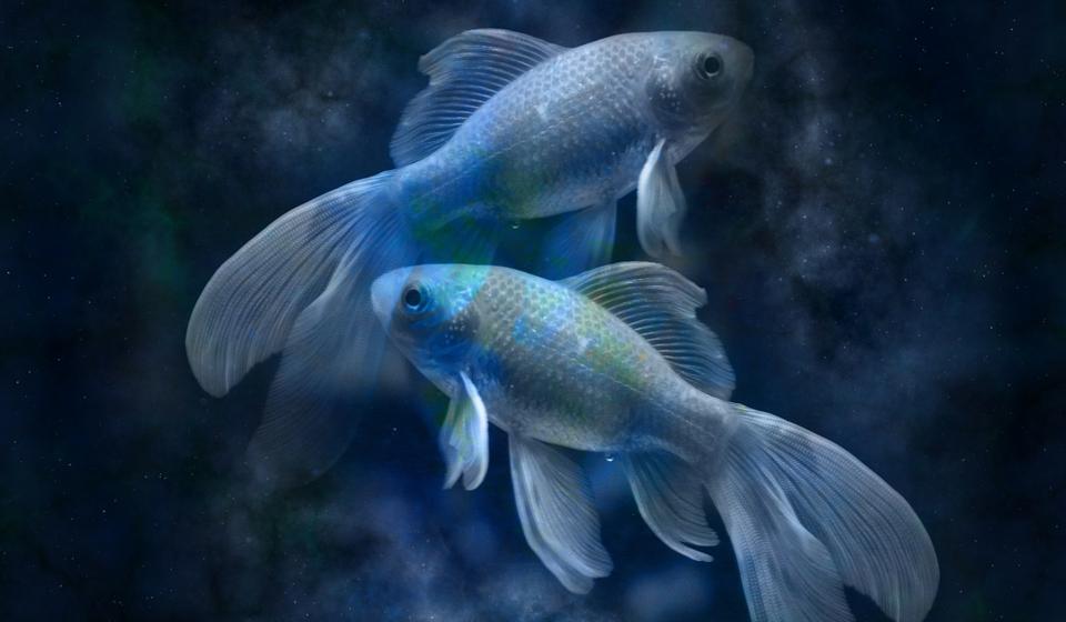 """Картинки по запросу """"Рыбы"""""""
