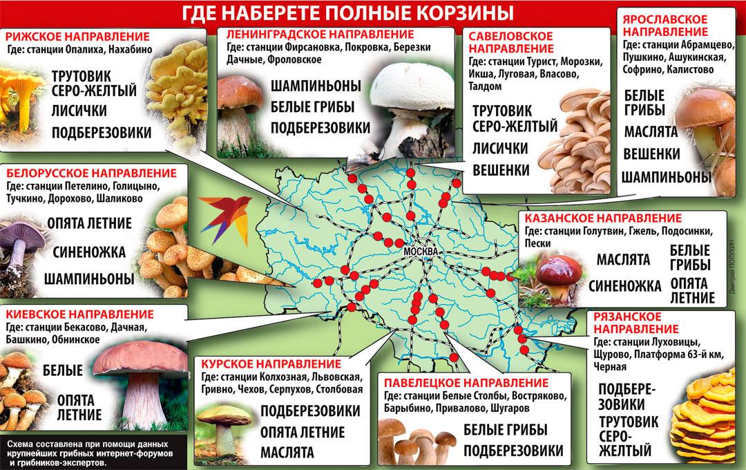 Грибы в Подмосковье: Какие есть сейчас, в июне 2020 года, в лесу
