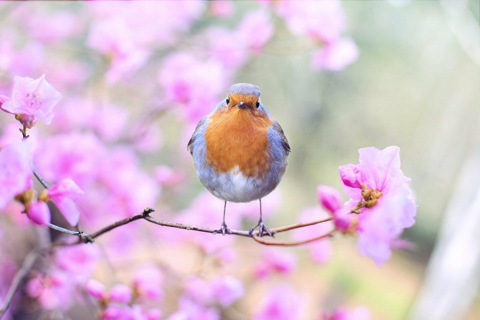 Международный день птиц 2022: какого числа, история и традиции праздника