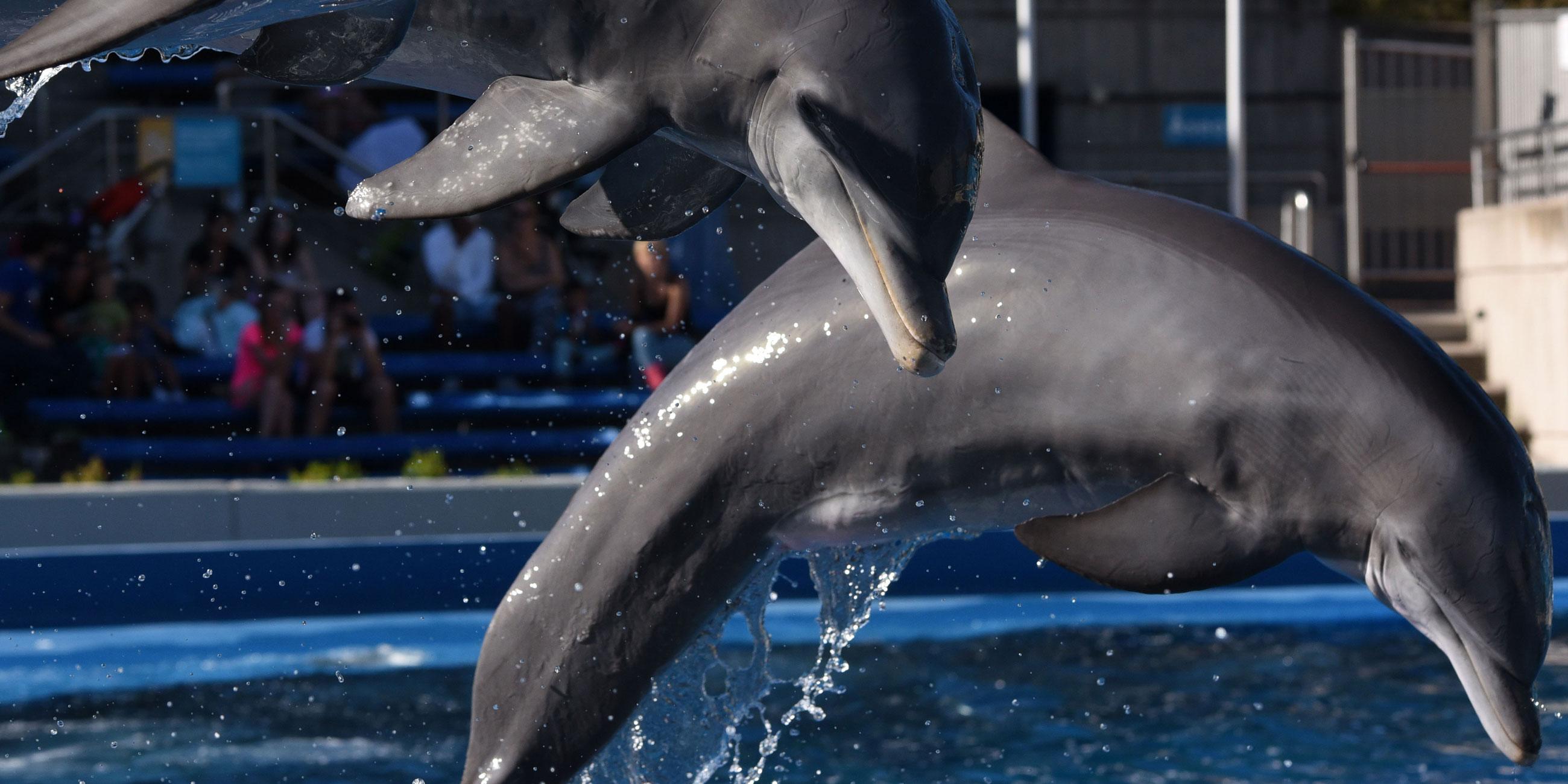 В Анапском дельфинарии шоу проходит под открытым небомФото: globallokpres.com
