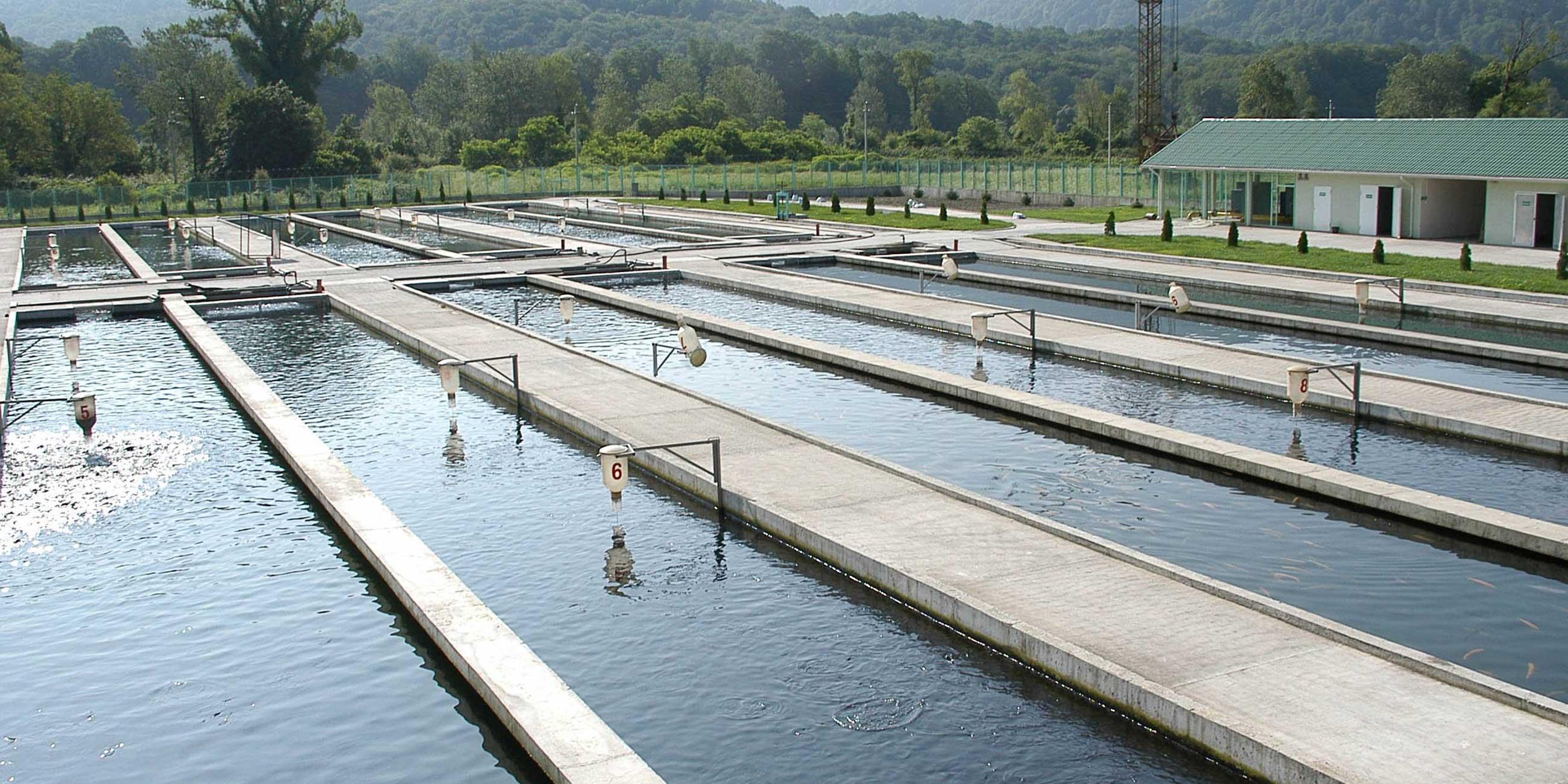 Форелевая ферма – это огромная система бассейнов, наполненных чистыми водами реки Мзымты.Фото: globallookpress.com