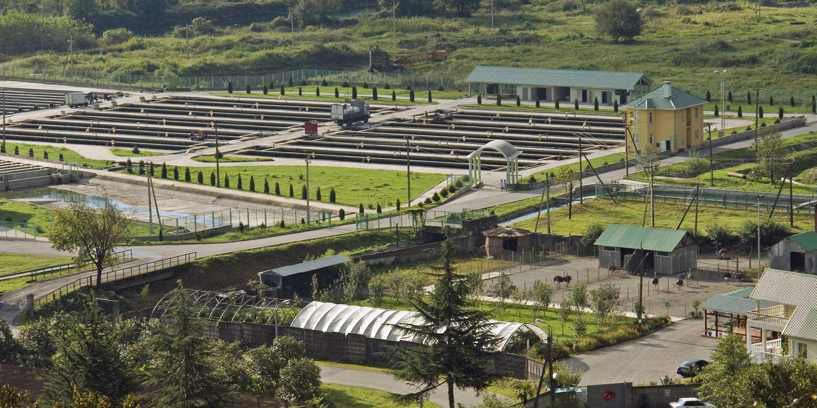 Форелевое хозяйство близ Адлера - одно из крупнейших в России.Фото: globallookpress.com