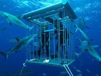 Неофициальная столица больших белых акул - это небольшая рыболовецкая...
