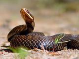 Симптомы отравления ядом гадюковых змей проявляются в...