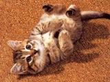 ...кошка, трется о ноги, ты гладишь ее