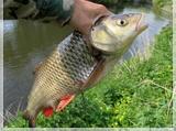 ...вдруг рыба клевала, поймал много, а в следующий раз, таки-же способом...