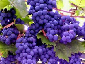 Виноград или изюм подпитывают измученную печень калием и фруктовыми сахарами.