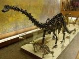 Вымершие рептилии.  Tags. архозавры. динозавры. завроподы.  4 comments. ящеротазовые. завроподоморфы.