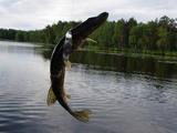 рыбалка на волге. ловля щуки.