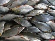 Уникальная технология - схема простой электронной приманки для рыбы (питание 12 V). Улов - 1-3 ведра/час. для...