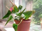 FloralWolrd.ru Мир растений, энциклопедия