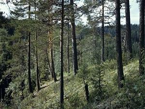 http://kp.ru/f/12/image/34/90/2539034.jpg