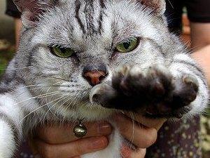 Кошка Ромашка выжила в катастрофе Ан-24 на Оби