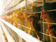 Под обращением подписались 340 сотрудников птицефабрики.