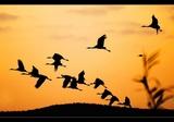 Фото 27.  Стаи перелётных птиц К югу, к югу, к солнцу улетели.