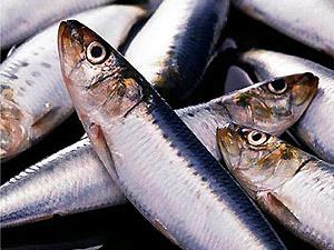 Шведы обнаружили в обычной рыбе большое содержание ядовитых веществ