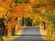 природа, дорога, осень, красота, картинки. красотища / природа, дорога, осень, красота...