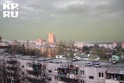 Аллергологи сообщают об опасной концентрации пыльцы в воздухе