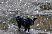 В Челябинской области расцвела черемуха и… выпал снег