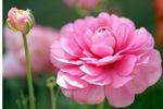 50 Beautiful Flowers HQ Wallpapers (39 обоев) .