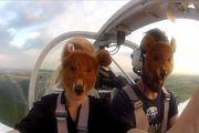 Нелегальные шведские медведи нашлись в Сухарево