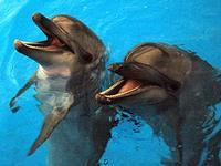 В Екатеринбурге открылся дельфинарий