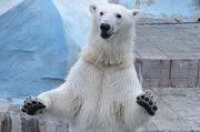 Новосибирский зоопарк устроит праздник на свое 65-летие