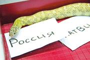Уфимский последователь осьминога Пауля месяц назад предсказал победу американским хоккеистам