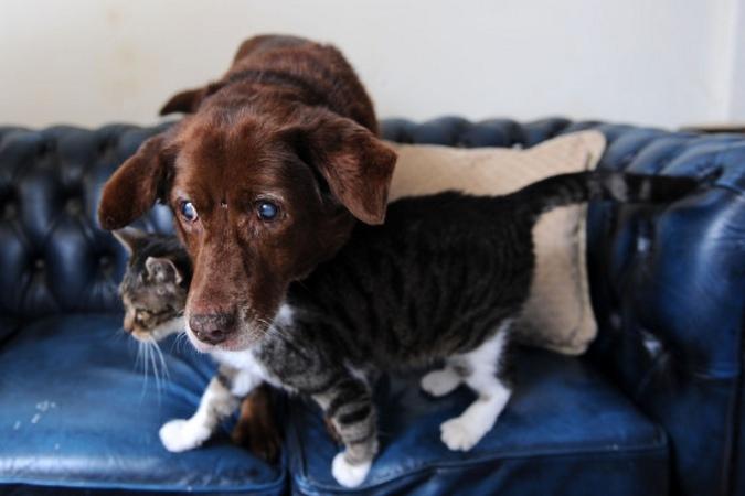 Кот стал поводырем для слепой собаки