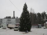 Самую красивую елку в этом году поставили в Пушгорах