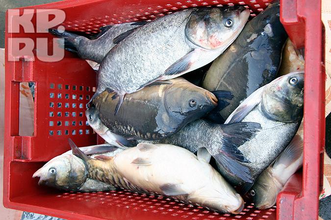 На Алтае изъяли 27 тонн контрабандной рыбы