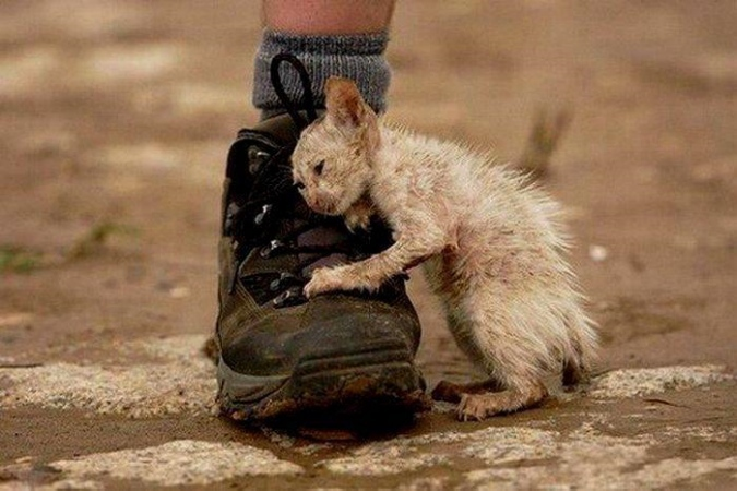 проблемы бездомных животных: