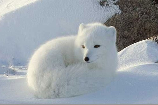 самые красивые фото животных Красивые фото