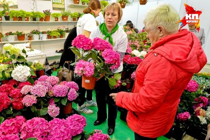 Выставка весенний сад и огород