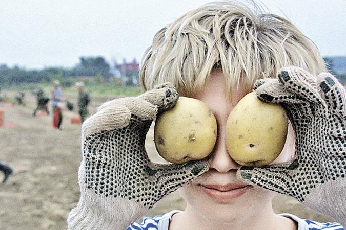 Брянская область собрала картофеля больше, чем вся Белоруссия