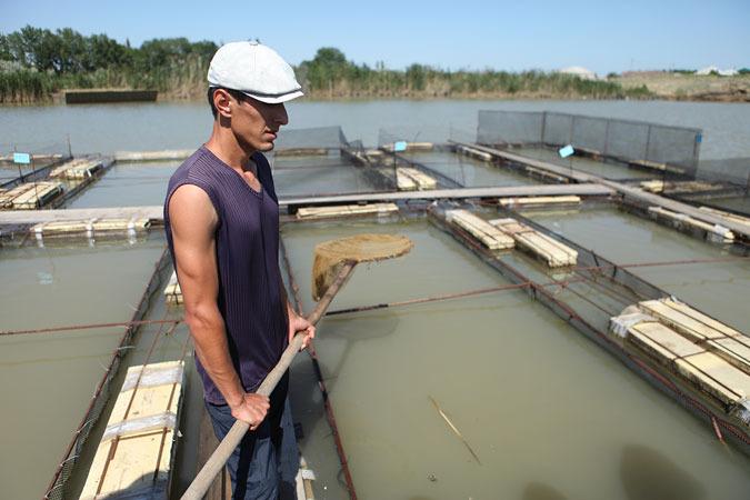 В Дагестане выкопают 100 прудов и будут разводить форель