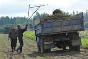Новая земельная реформа: бурьян и пустыри - садоводам и фермерам!
